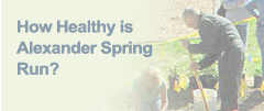 How Healthy is Alexander Spring Run?
