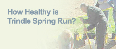 How Healthy is Trindle Spring Run?